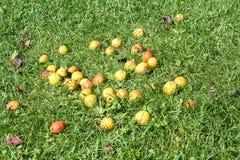 Груши на траве Стоковое Изображение RF