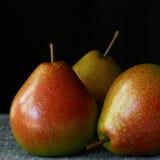 груши 3 Стоковые Фото