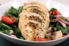 грудь chiken салат Стоковые Фотографии RF