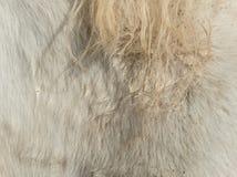 Грязная грива лошади стоковое изображение rf