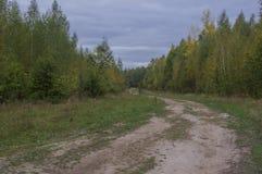 Грязная улица глубоко в древесины Стоковые Изображения RF