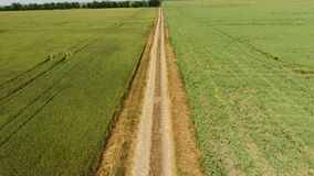 Грязная улица между 2 полями Поле и пшеничное поле гороха Взгляд сверху пшеничного поля Летать над пшеничным полем акции видеоматериалы