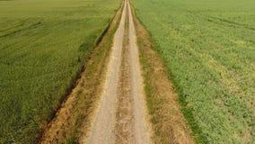 Грязная улица между 2 полями Поле и пшеничное поле гороха Взгляд сверху пшеничного поля Летать над пшеничным полем видеоматериал