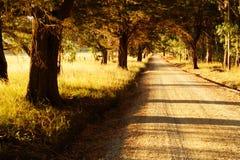 Грязная улица на заходе солнца лета стоковое фото
