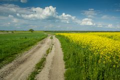 Грязная улица полем желтых рапса и облаков на небе стоковые изображения