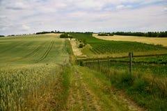 Грязная улица разделяя виноградник и поле в чехословакской сельской местности Стоковое фото RF