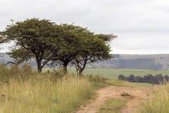 Грязная улица бежать через естественные деревья и злаковик Стоковая Фотография RF
