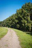 Грязная улица и лес Стоковое Изображение RF