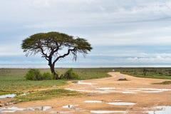 Грязная улица к лотку Etosha, Намибии Стоковые Изображения RF