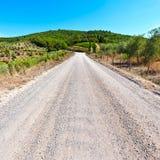 Грязная улица между виноградниками Стоковое Изображение RF