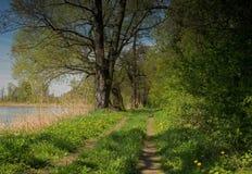 Грязная улица прудом весной Стоковые Фото