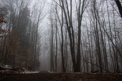 Грязная улица через туманный лес Стоковое Изображение RF