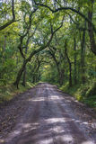 Грязная улица Lowcountry с дубами к плантации залива ботаники в острове Edisto Стоковая Фотография RF