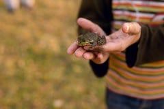 Грязный мальчик который играл снаружи держит маленькую лягушку в его руках стоковые изображения rf
