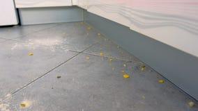Грязный пол с остатками еды, мука кухни, хлопья мозоли после варить Взгляд конца-вверх акции видеоматериалы