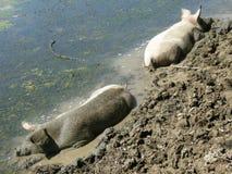 грязь ванн Стоковое Фото