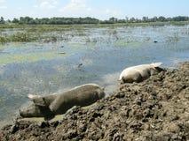 грязь ванн Стоковое фото RF