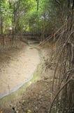 Грязь и вода в лесе Стоковое фото RF