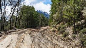 Грязь дороги леса Стоковое Изображение RF