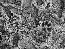 грязь предпосылки Стоковое Изображение