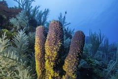 Губка кораллового рифа стоковое фото
