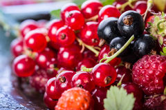 губка красного цвета смородины торта Плита с сортированными ягодами лета, полениками, клубниками, вишнями, смородинами, крыжовник Стоковое Изображение