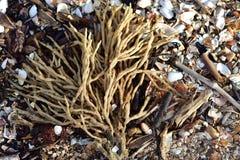Губка пальца на пляже гравия Стоковые Фотографии RF
