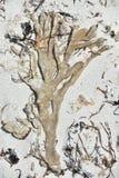 Губка пальца засыхания Стоковая Фотография