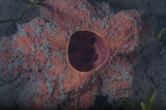 губка Стоковое фото RF