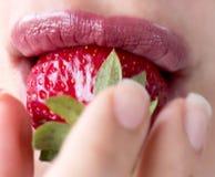 Губы женщины с красной клубникой на предпосылке нерезкости Розовая губная помада ягода свежая Девушка есть клубнику Стоковая Фотография