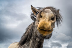 Губы лошади Стоковая Фотография RF