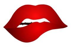 губы сексуальные Vector иллюстрация сексуальных губ изолированных на белой предпосылке Стоковое фото RF