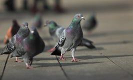 гулять вихрунов стоковая фотография