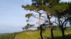 Гулять в древесины стоковые фотографии rf