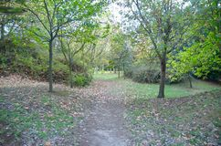 Гулять в парк Стоковое Фото