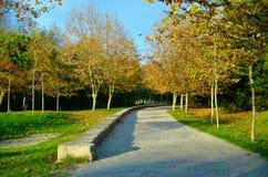 Гулять в парк Стоковые Изображения RF