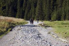 гулять гор Стоковое фото RF