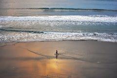 Гулять на заходе солнца стоковое фото rf