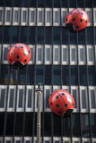 гулять офиса ladybirds здания Стоковая Фотография RF