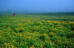 гулять поля стоковое изображение