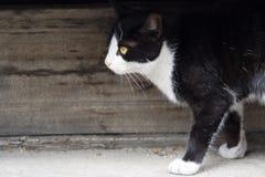 гулять прелестного кота малый стоковое изображение