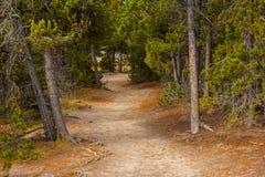 гулять путя пущи Стоковые Фото