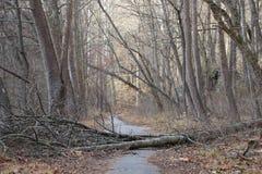 гулять путя пущи Стоковые Фотографии RF