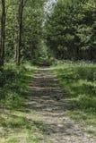 гулять путя пущи Стоковые Изображения RF
