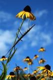 гулять ручки цветка Стоковое фото RF