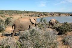 гулять слона Стоковое Фото