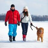 гулять собаки Стоковые Изображения
