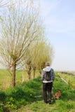 гулять собаки Стоковая Фотография