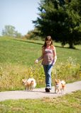 гулять собак Стоковые Фото