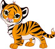 гулять тигра младенца Стоковая Фотография